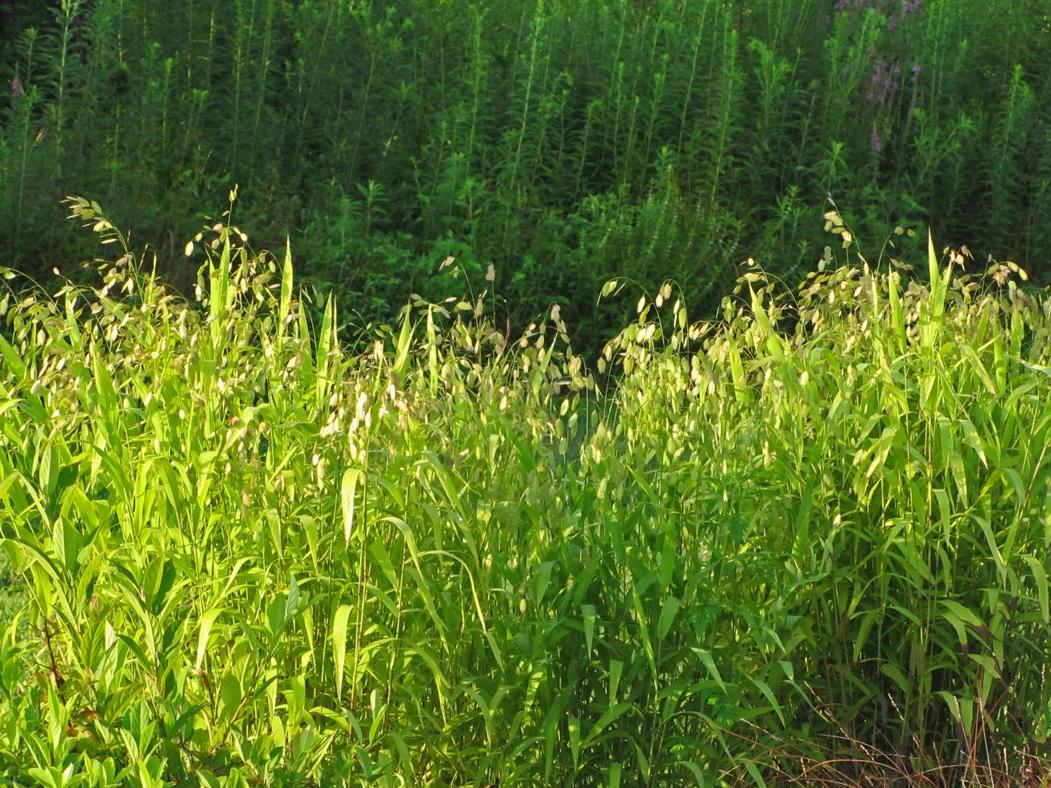 Wilderness Garden_06