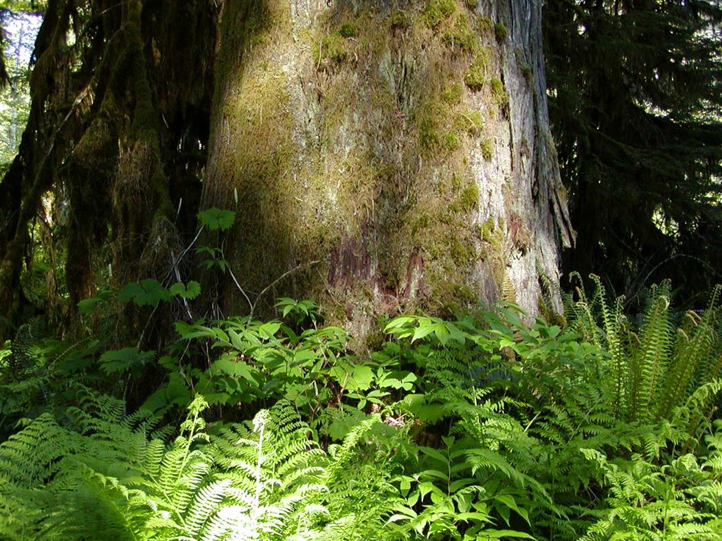Wilderness Garden_07