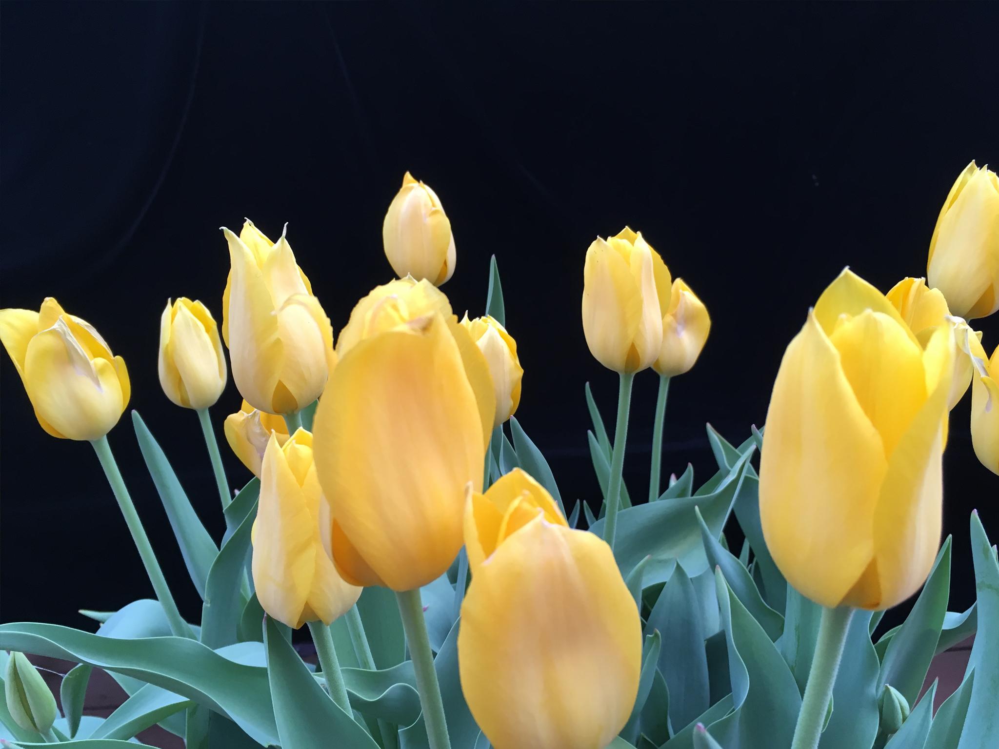 flower bloom 04